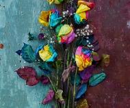 Pride Roses